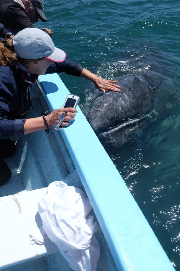 DEB PETTING BABY WHALE