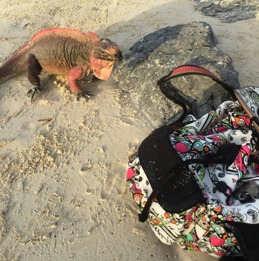 IGUANA LOOKING AT MY BACKPACK