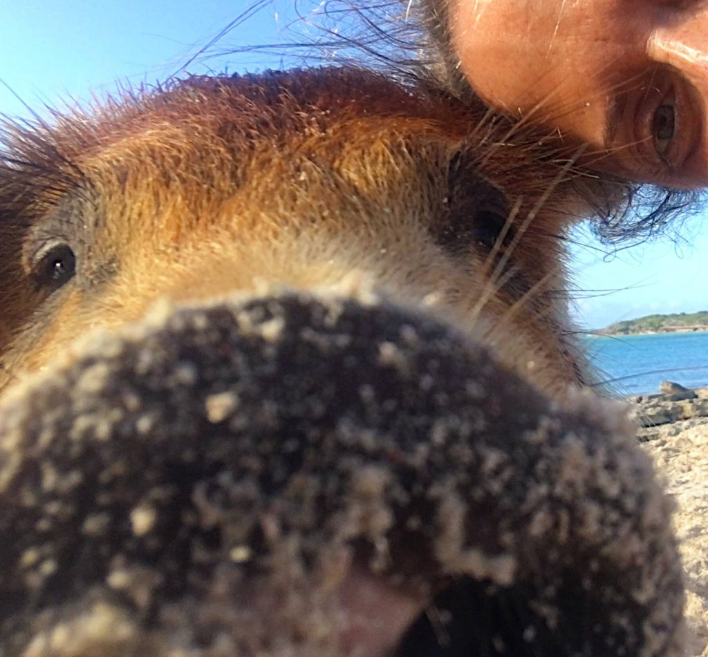 PIG AND ME SELFIE