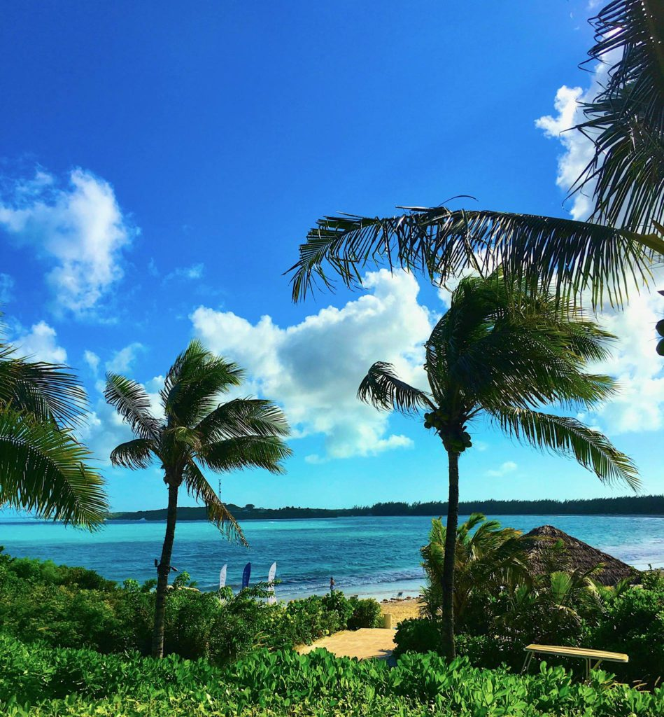 Palm Trees & Ocean
