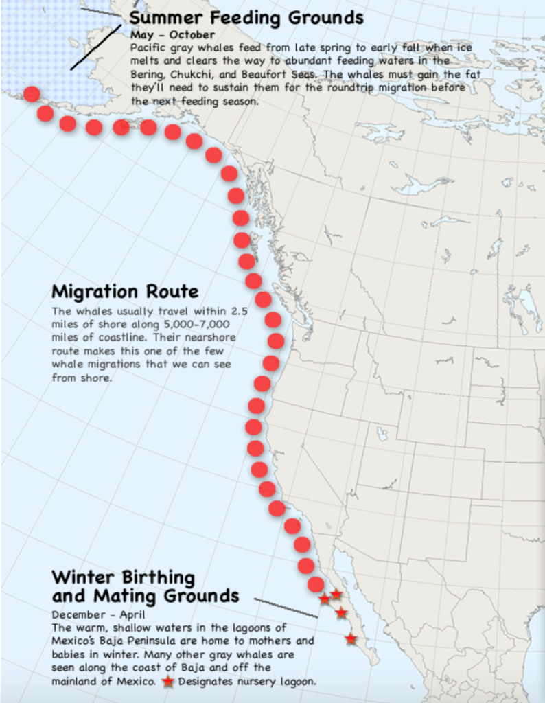Whale migration map