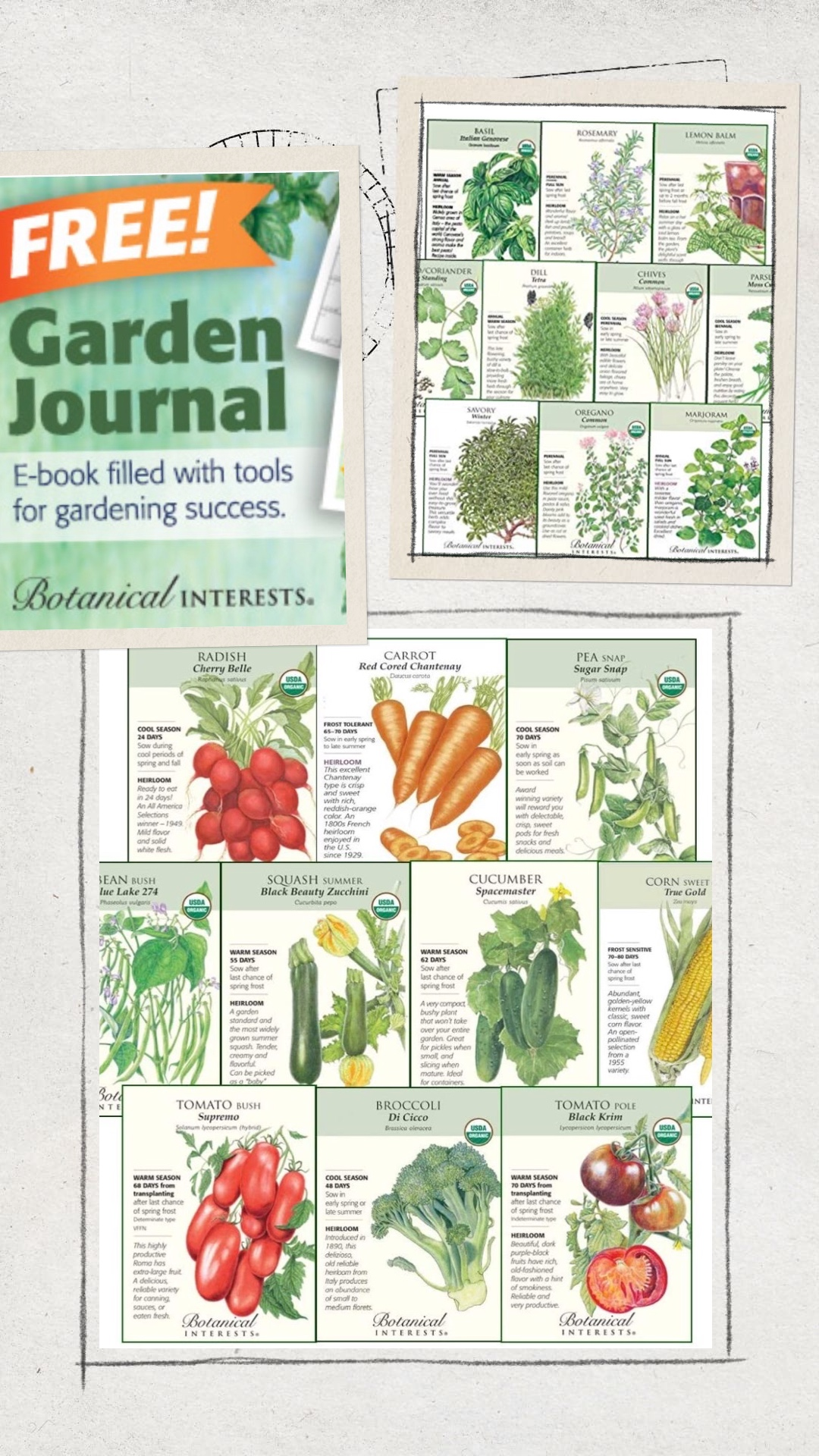 Seed packets spring tips